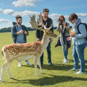 Central English School Dublin students with deer